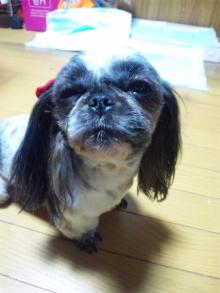 Doki☆Waku☆シーチャンズ♪♪-110221_203626.jpg