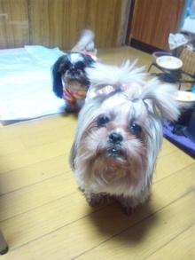 Doki☆Waku☆シーチャンズ♪♪-110403_142226.jpg