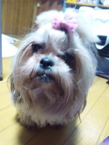 Doki☆Waku☆シーチャンズ♪♪-110517_014124.jpg