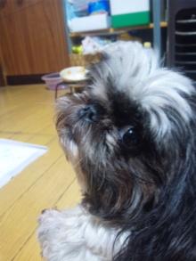 Doki☆Waku☆シーチャンズ♪♪-110529_134151.jpg