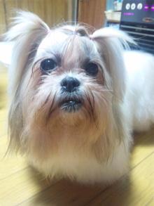 Doki☆Waku☆シーチャンズ♪♪-110903_204122.jpg