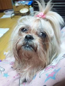 Doki☆Waku☆シーチャンズ♪♪-110907_010353.jpg