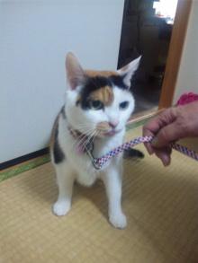 Doki☆Waku☆シーチャンズ♪♪-110924_220353.jpg