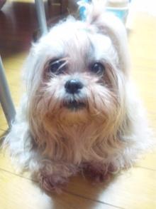 Doki☆Waku☆シーチャンズ♪♪-110926_214138.jpg