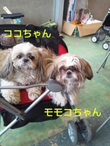 Doki☆Waku☆シーチャンズ♪♪-PhotoHenshu_20120424021223.jpg