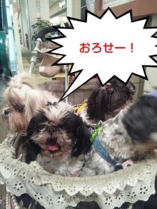 Doki☆Waku☆シーチャンズ♪♪-PhotoHenshu_20120501041419.jpg