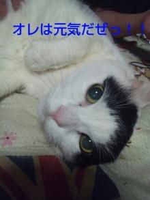 Doki☆Waku☆シーチャンズ♪♪-PhotoHenshu_20120510135234.jpg