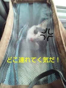 Doki☆Waku☆シーチャンズ♪♪-PhotoHenshu_20120529114028.jpg