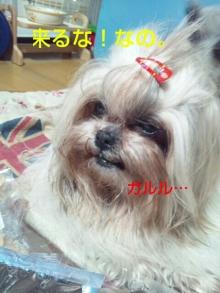 Doki☆Waku☆シーチャンズ♪♪-PhotoHenshu_20120530134016.jpg
