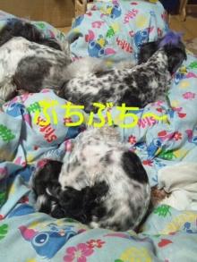 Doki☆Waku☆シーチャンズ♪♪-PhotoHenshu_20120531132646.jpg