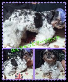 Doki☆Waku☆シーチャンズ♪♪-PhotoHenshu_20120531133829.jpg