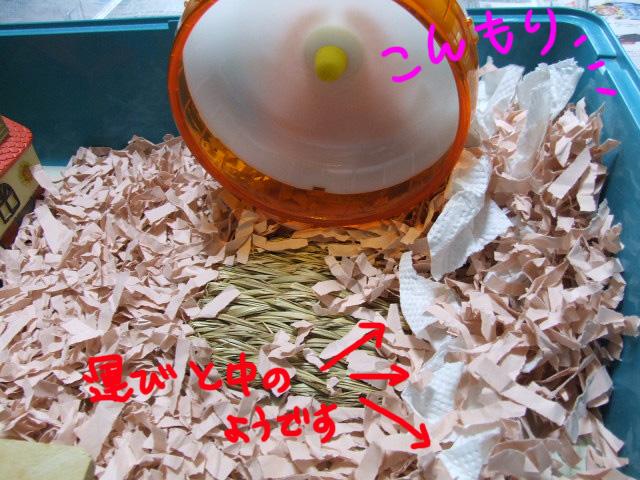 DSCF110429a1459.jpg