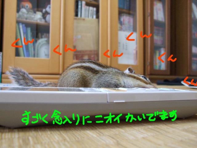 DSCF111021a5465.jpg