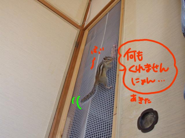 DSCF111027f6088.jpg