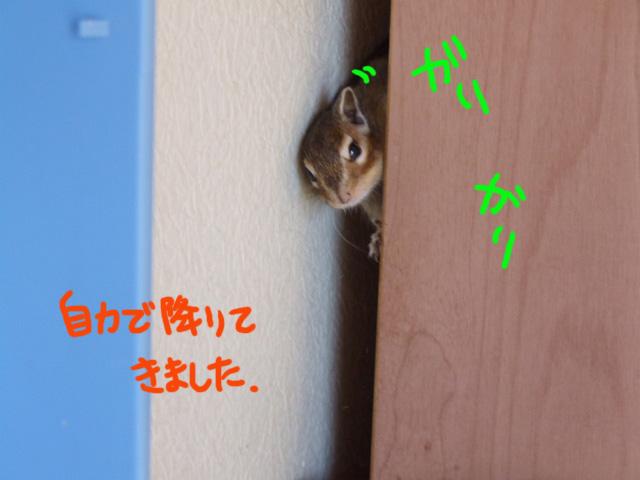 DSCF111212b7432.jpg