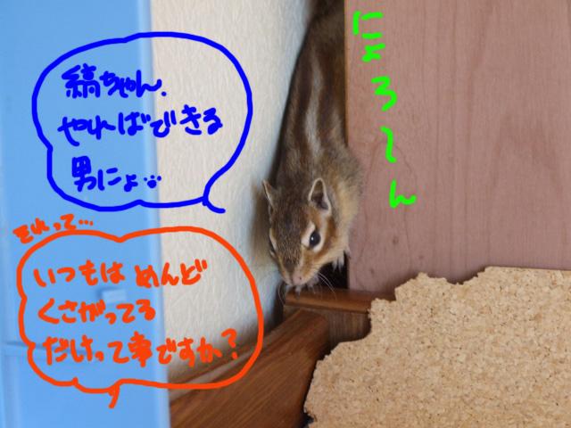 DSCF111212d7434.jpg