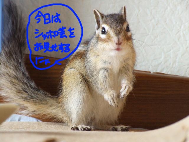 DSCF120112a6271.jpg