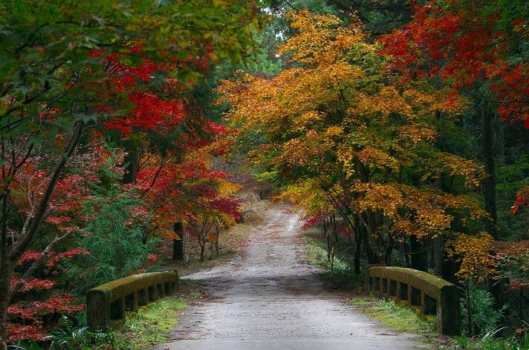 秋へ架ける橋