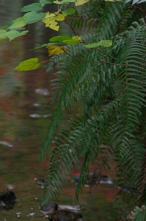 秋深まる森の中で
