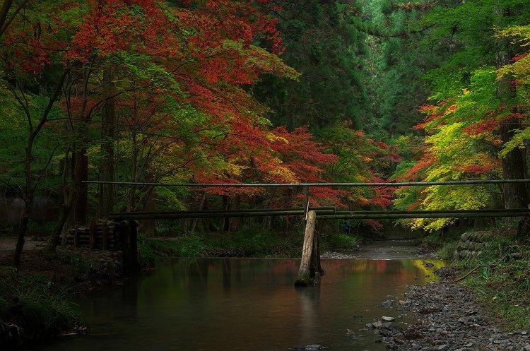 小国の杜は秋の装い