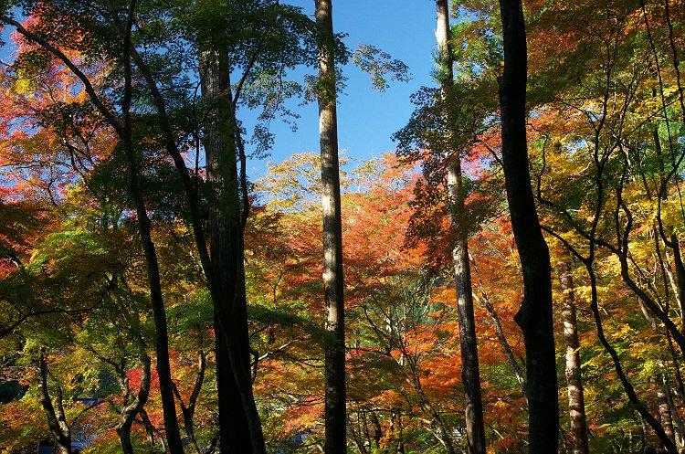香嵐渓 三  ~輝ける秋に~