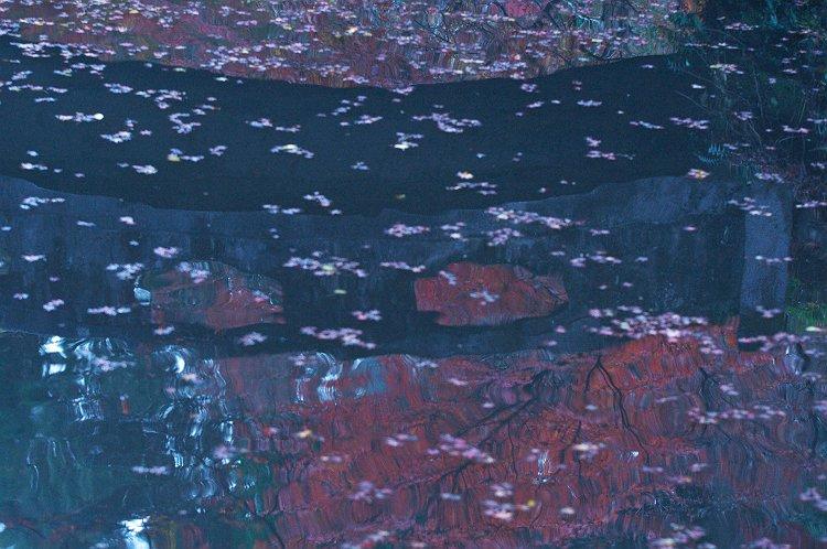 大洞院の紅葉 一