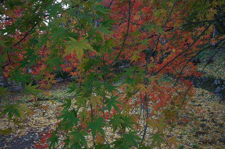 大洞院の紅葉 二