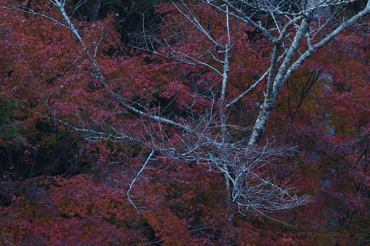 晩秋の油山寺 六