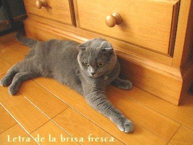 cat2011_01.jpg