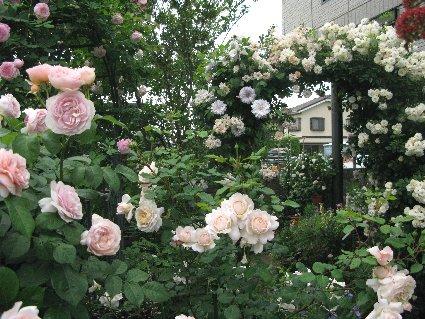 2011年5月 庭の様子