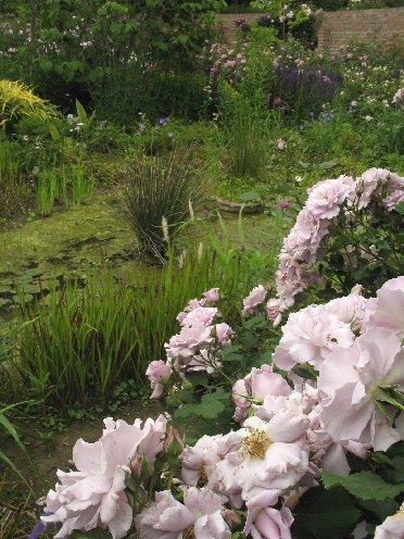 野鳥の森ガーデン 水辺のローズガーデン