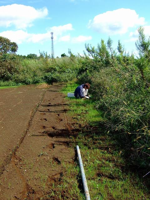木を植えた男