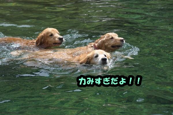 DSC_7297_2014092221033540a.jpg