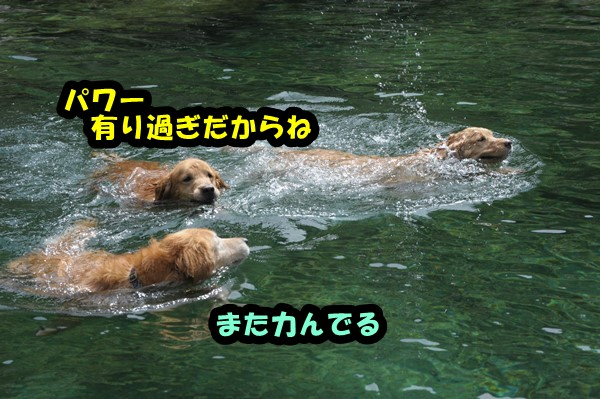 DSC_7302_20140922210507432.jpg