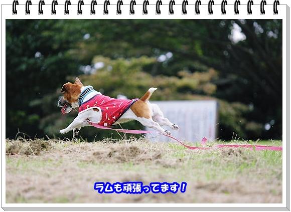 2009ブログNo2