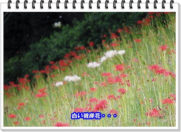 2009ブログNo9