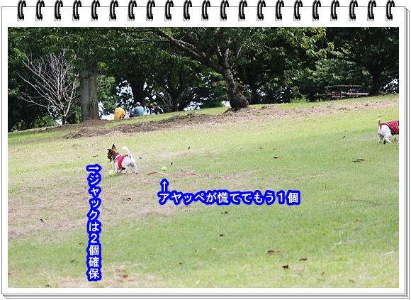 2011ブログNo7