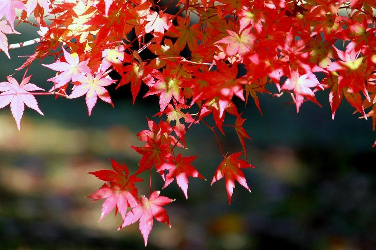 あけぼの日本庭園で