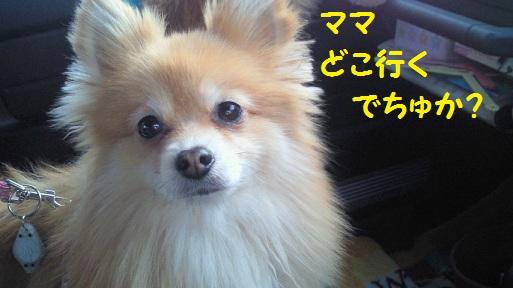 201203211658001.jpg