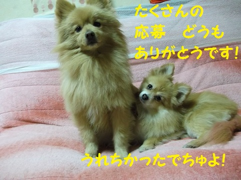 DSCF1046_20120305212700.jpg