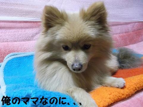 DSCF1078_20120311004023.jpg