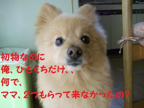 DSCF1761_20120517083516.jpg