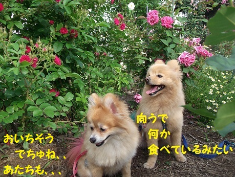 DSCF1842_20120525212336.jpg