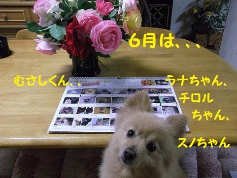 DSCF1908_20120601011202.jpg