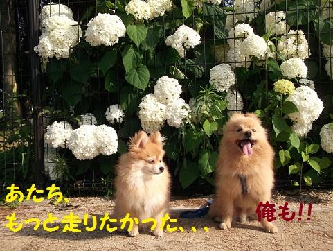 DSCF2132_20120630170006.jpg