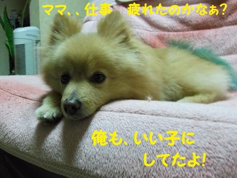 DSCF2137_20120702214932.jpg