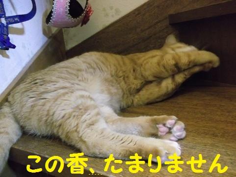 DSCF2282_20120729114640.jpg