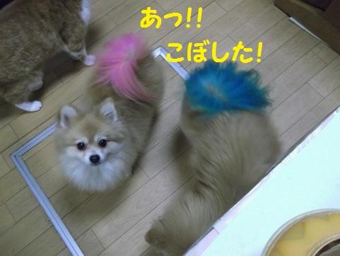 DSCF2798_20121010004416.jpg