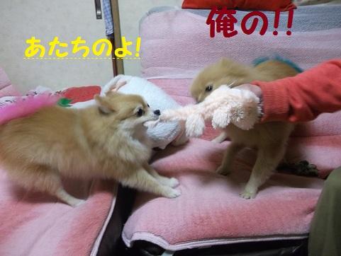 DSCF3081_20121114082045.jpg