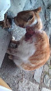 timgc118735-1怪我の猫